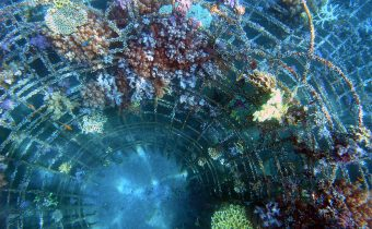 Future relief for coral reefs: currents, calcification and cooperation