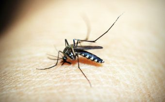 Advances in malaria vaccine development